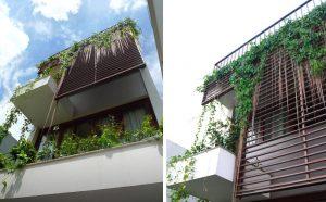 Mẹo trồng cây tạo bóng mát cho nhà ống 1