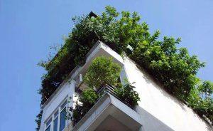Mẹo trồng cây tạo bóng mát cho nhà ống. 2