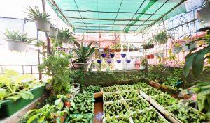 Cách chống thấm vườn sân thượng cho nhà biệt thự