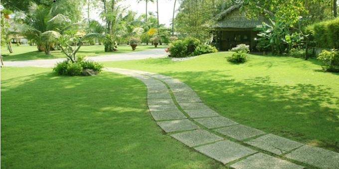 3 - Cỏ Lông Heo Cho Sân Vườn Nhà Ống, Nhà Biệt Thự